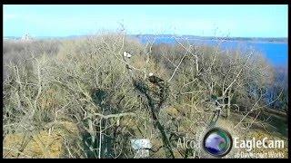 Alcoa eagles 1.6.16 530pm Justice & Liberty