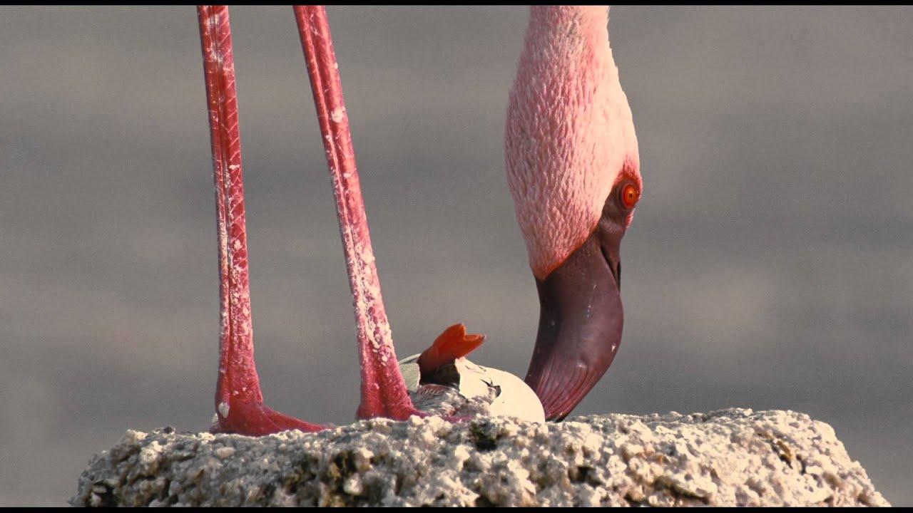 Пурпурное крыло - Трейлер