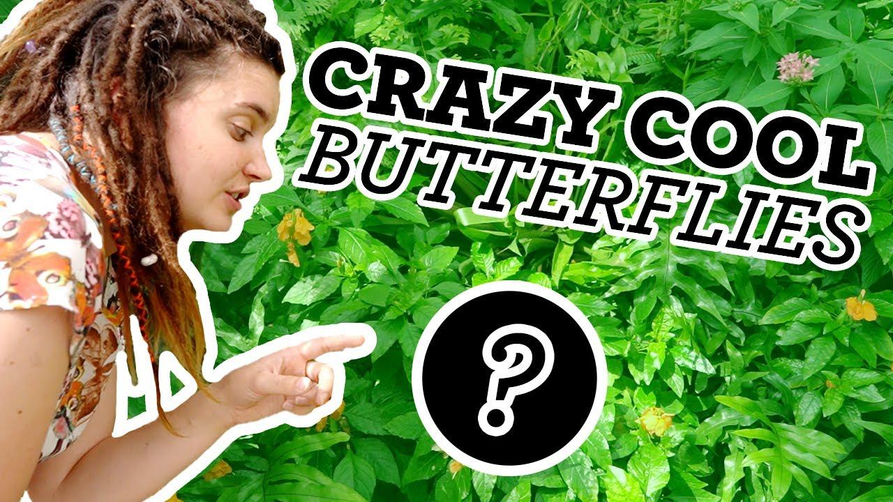 Top 5 Butterflies | Butterflies you must see!