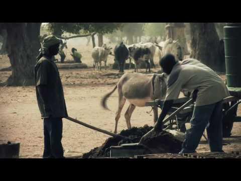 Kanaga System Krush Trailer