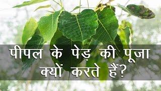 पीपल के पेड़ की पूजा क्यों करते हैं? || Why Worship Peepal Tree?
