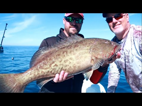 Tampa Bay Grouper Spots And Tips - How To Find And Catch Gag Grouper