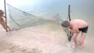 Мальчики ловят рыбу бреднем .