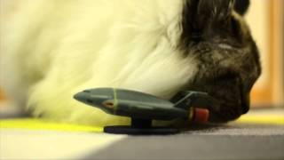 Velmu the cat meets 3D Printed Thunderbird 2
