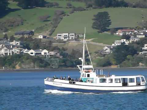 MV Monarch Cruising on the Otago Harbour