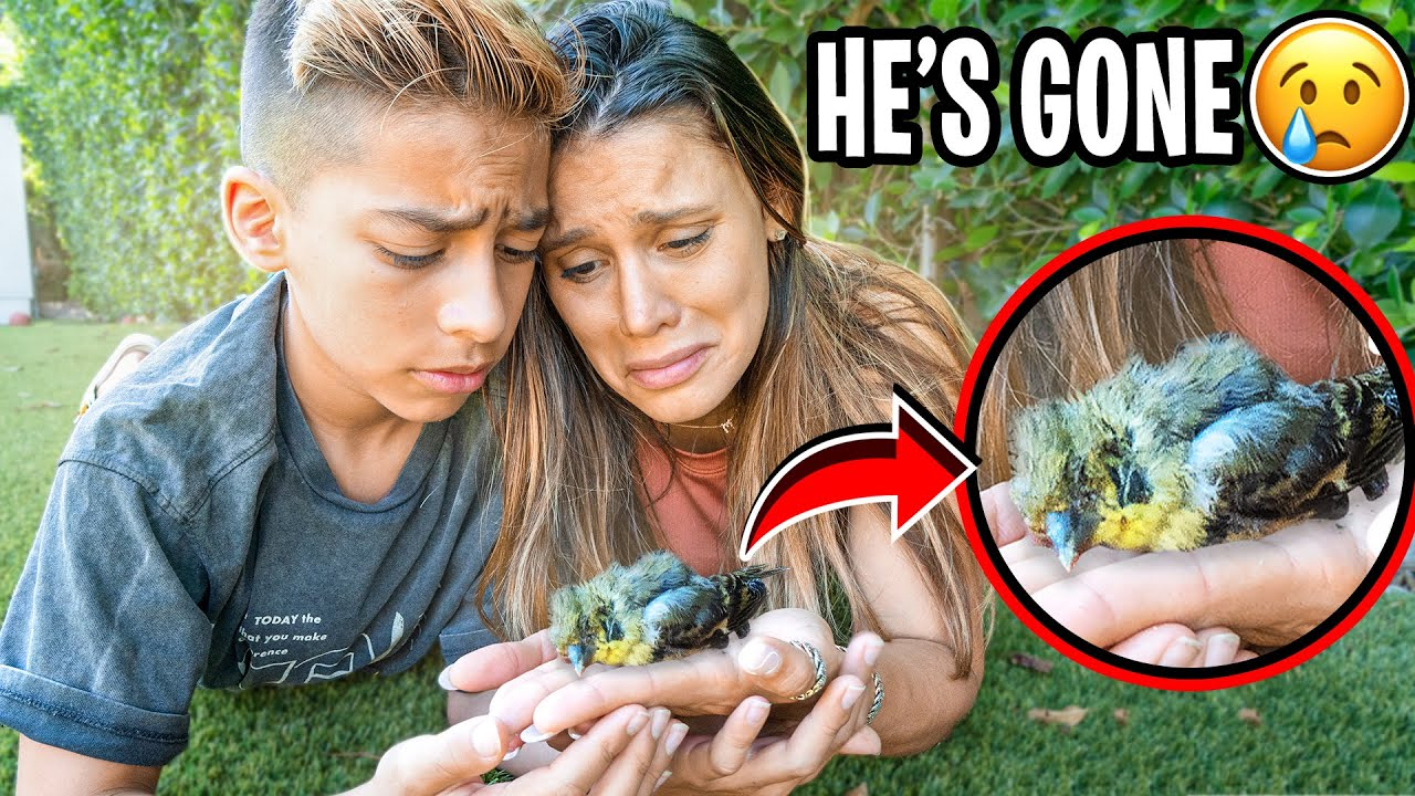 Download WE COULDN'T SAVE HIS LIFE.. (HE'S GONE) 💔 | The Royalty Family