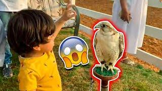 الطائر المتوحش عض اصغر طفل في العالم | شريده انحاش من الخوف ! لايفوتكم