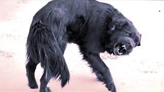 Порядок действий ветеринарных специалистов при угрозе возникновения бешенства животных