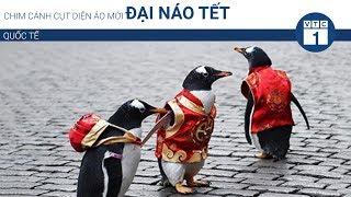 Chim cánh cụt diện áo mới đại náo Tết | VTC1