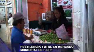 Pestilencia total en mercado municipal de Felipe Carrillo Puerto