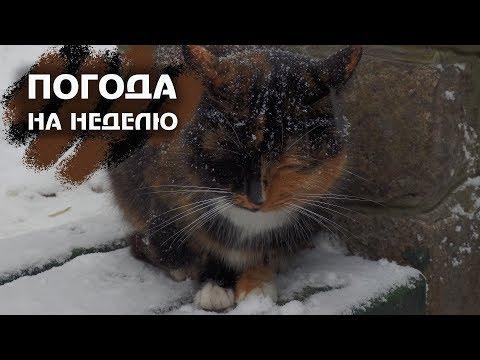 Зима близко! Прогноз погоды в Москве на неделю