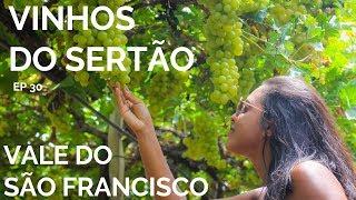 VINHOS DO SERTÃO VINÍCOLA MIOLO E VAPOR DO VINHO   VALE DO SÃO FRANCISCO 5   COMO CHEGAR 30