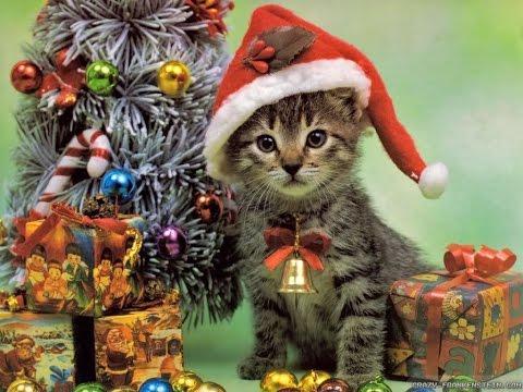 Katzenparadies zu Weihnachten