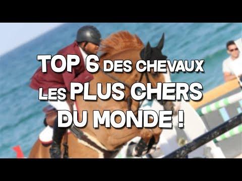 top-6-des-chevaux-les-plus-chers-du-monde-!