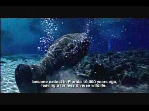 Pleistocene Epoch - Florida Fossils: Evolution of Life and Land