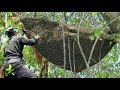 Berburu Madu Lebah Liar Hutan | Hunting honey bee forest