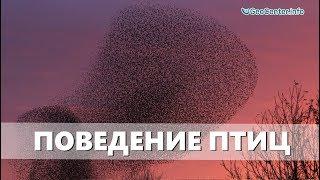 Необычное поведение птиц.  Аномальная погода.  Климатические изменения. Выпуск 97