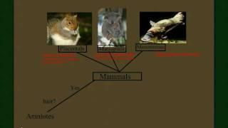 Vertebrate Diversity: Mammals Part 2 (the Subclasses)