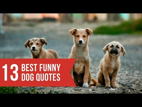 funny-dogs-and-dog-quotes