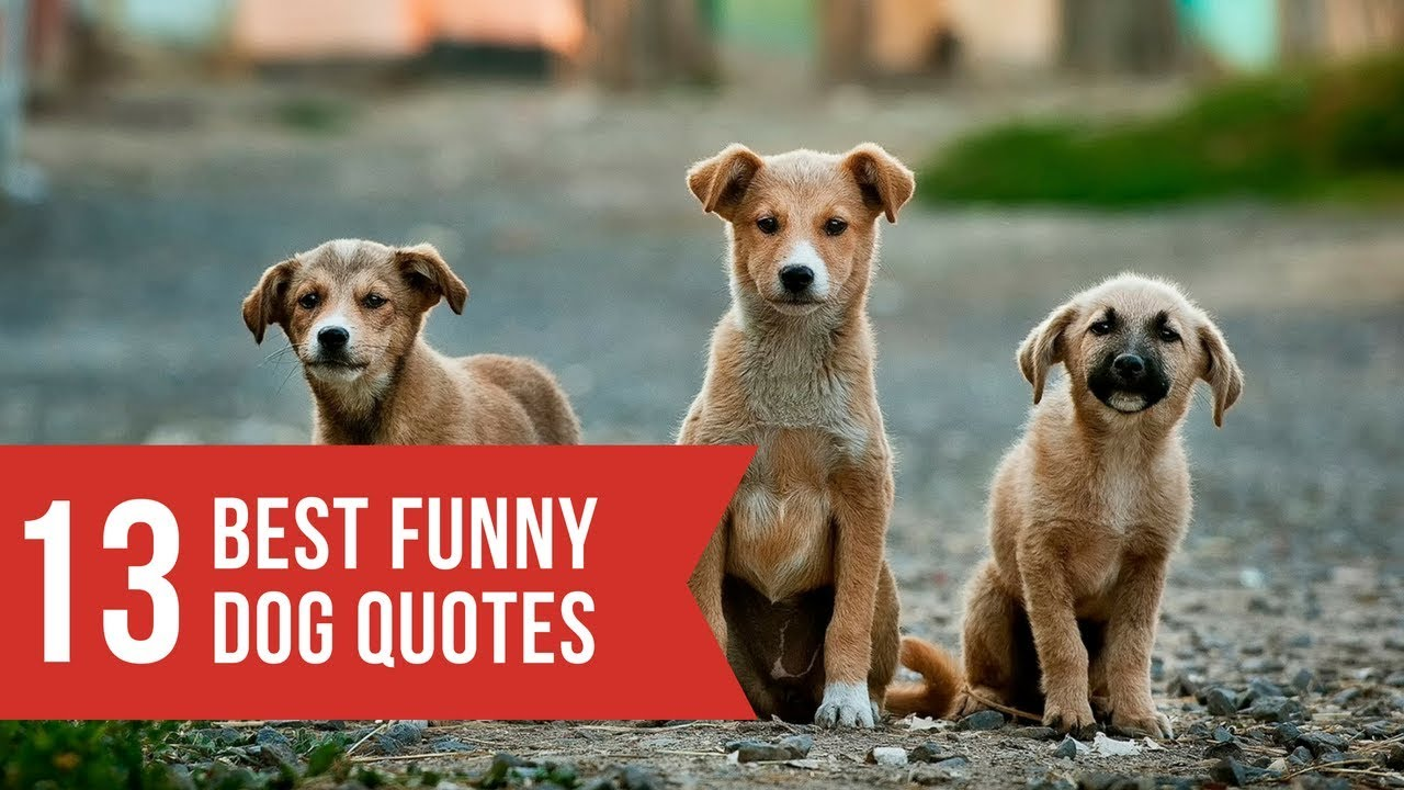 Funny dogs and dog quotes