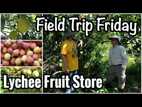 Field Trip Friday- Lychee Fruit Store in Loxahatchee