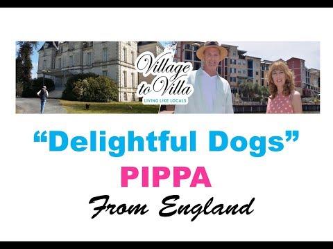 Pet-sitting Pippa the English Springer Spaniel