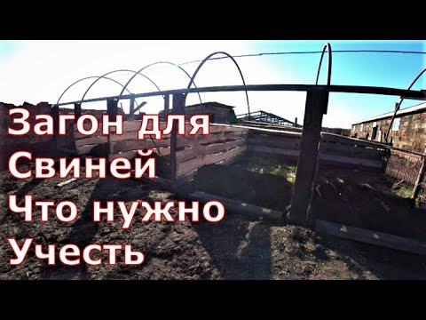 Видео: Размеры загона для свиней / На что обратить внимание при строительстве