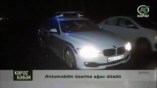 Avtomobilin üzərinə ağac düşdü - Kəpəz TV