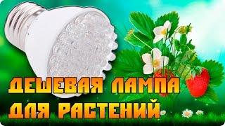 Светодиодная дешевая лампа для растений.(, 2014-11-18T19:07:33.000Z)