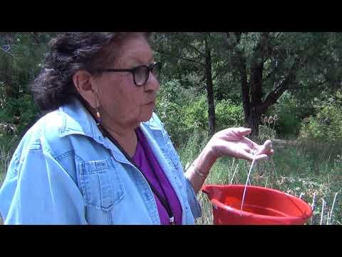 Picking Chokecherries With Shoshone Paiute
