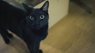 N2 the Talking Cat S4 Ep17 - #TeamNoPants