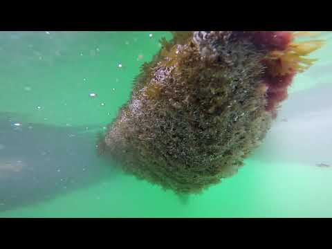 Full length raw video. Extreme Sailboat hull cleaning and anode replacement. GoPro Hero 5.