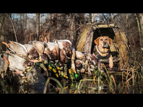 Arkansas Flooded Timber Duck Hunting – Fowled Reality