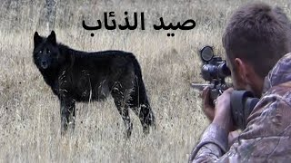 صيد 30 ذئبا بالقناصه 🐺صيد بلا رحمه Hunting 30 wolves by snipers