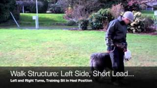Dog Training Tools - Head Collars