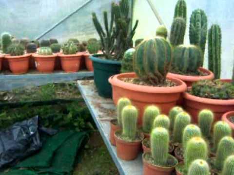 Vivero de cactus san ram n youtube for Viveros en quillota