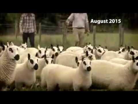 Rare breeds; Adam' s Farm. BBC Countryfile
