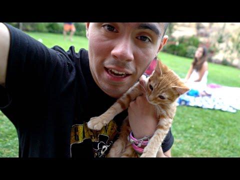 SMALLEST kitten in the WORLD