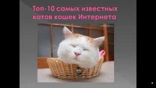 Топ 10-ка Самых Известных Котов и Кошек Интернета!