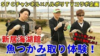 【コラボ企画】ハルポリと浜名湖新居海湖館「魚つかみ取り体験」に行ってみた!