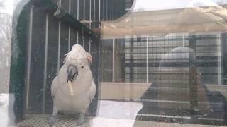 Ржач! Танцующий попугай(Смешное видео, прикольный танцующий попугай Еще видео: https://www.youtube.com/watch?v=wVryYEtLJVw., 2017-01-06T14:03:06.000Z)