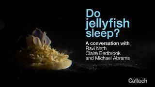 Do Jellyfish Sleep?
