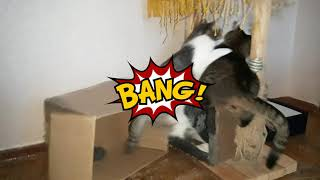 КоТиГад котики и коробкикоты играют в коробкесмешное видео с котикамиприколы с котами