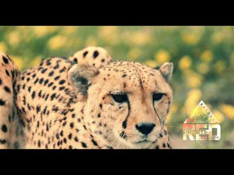 Wildlife Predator Footage Archive Promo Red Prism Media
