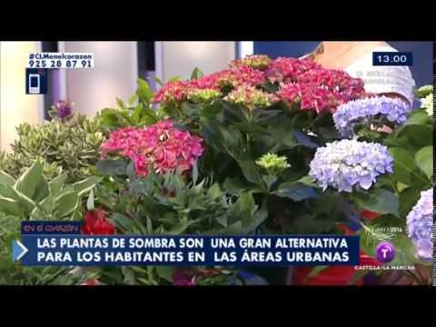 Plantas De Sombra Youtube - Plantas-de-sombra