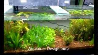 Nano Planted Aquariums Design By Jabbar(jbr) Aquarium Design India (spencerplaza)