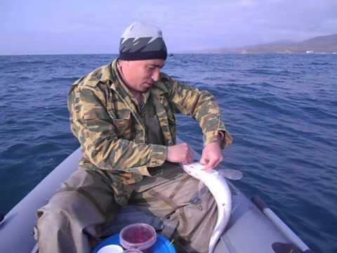 Ловля минтая г. Владивосток, Шамора