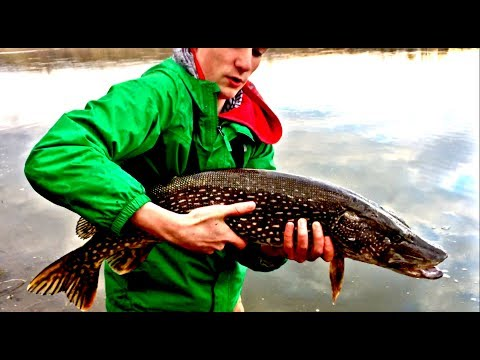 Catching HUGE Pike From The South Saskatchewan River!