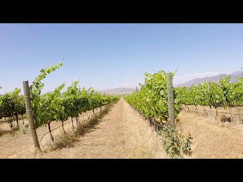 Valle de Guadalupe Wine Region - Travel Montage - GoPro