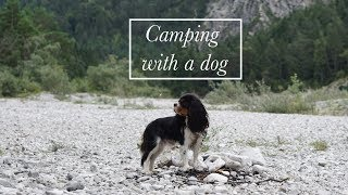 Adventure Trip with Dog | Camping with a Cavalier King Charles Spaniel